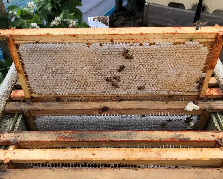 St Johns environmental addition of bees